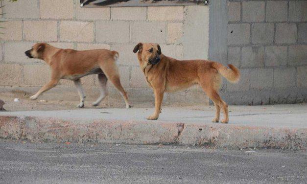 Emiten alerta por envenenamiento de perros