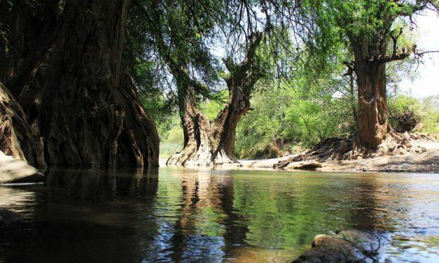 Niveles de los ríos se encuentran en los índices normales